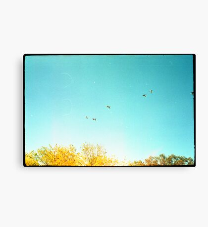 Seven Ducks Over Trees Canvas Print