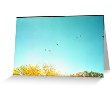 Seven Ducks Over Trees Greeting Card