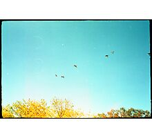 Seven Ducks Over Trees Photographic Print