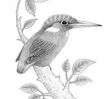 Kingfisher by Simon Harris