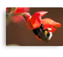 Nature's Honey Collector. Canvas Print