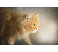 The Ginger Hunter Photographic Print