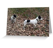 Jack Russell's In The Forest Greeting Card