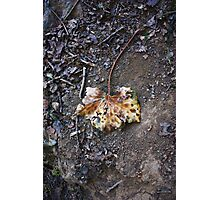 Strangely Coloured Leaf  Photographic Print