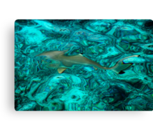 Baby Shark in the Turquoise Water. Production by Nature Canvas Print