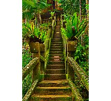 """""""Stairway In Paradise"""" Photographic Print"""