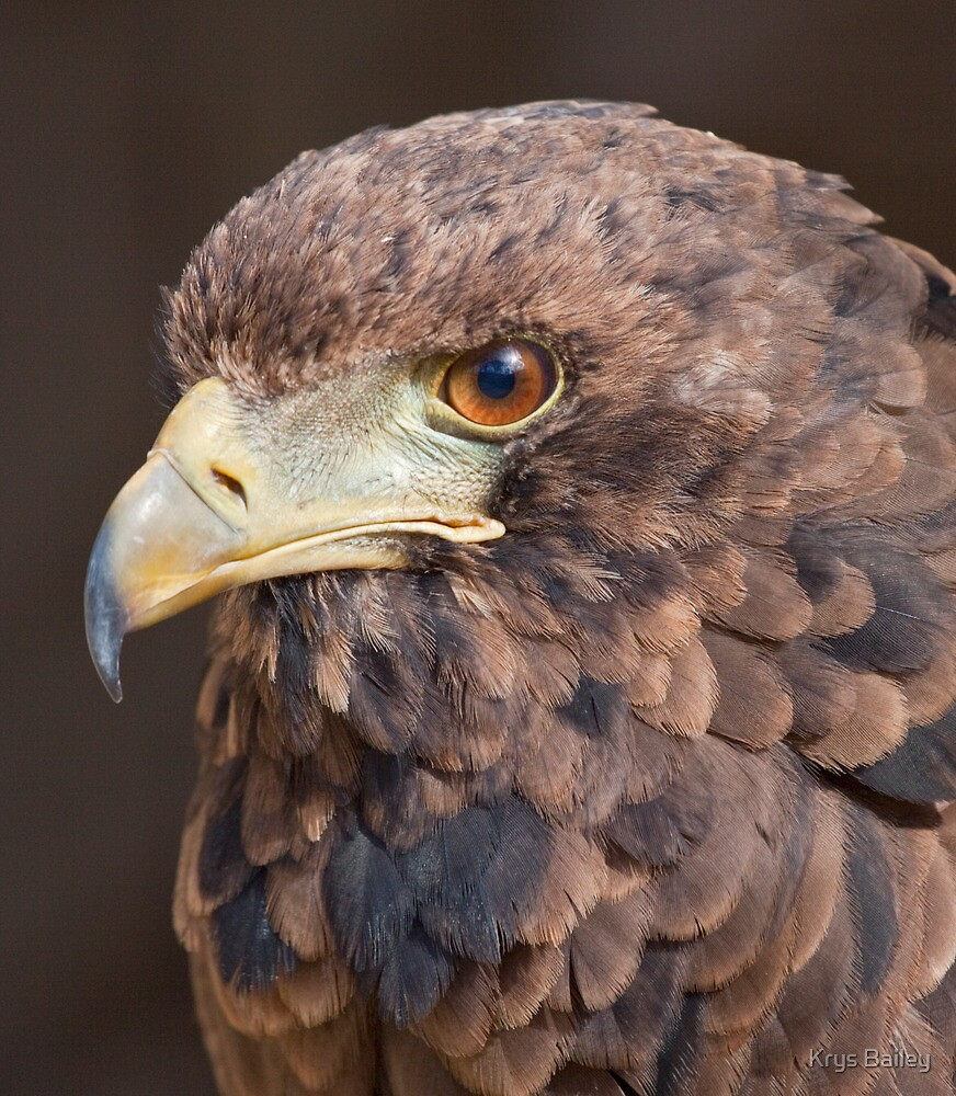 Pine Cone Eagle by Krys Bailey