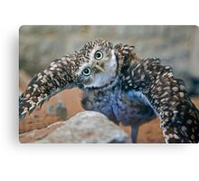 Owl with Attitude (Burrowing Owl) Canvas Print