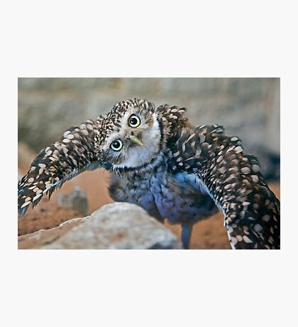 Owl with Attitude (Burrowing Owl) Photographic Print