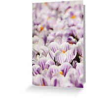 Lilac croci 2 Greeting Card