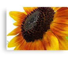 sun flower macro Canvas Print