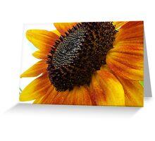 sun flower macro Greeting Card