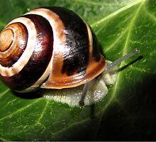 snail by Enri-Art