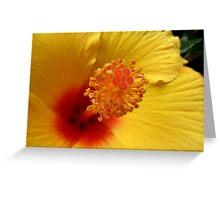 Hibiscus macro Greeting Card