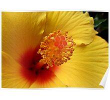 Hibiscus macro Poster