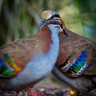Love Birds by diggle