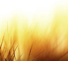 Caterpillar bristles macro by Triin Erg
