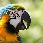 I&#x27;m Wonderful - Blue-and-yellow Macaw by Jo Nijenhuis