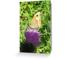 butterfly on a globe thistle Greeting Card