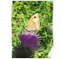 butterfly on a globe thistle Poster