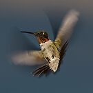 Humming Bird! by vasu