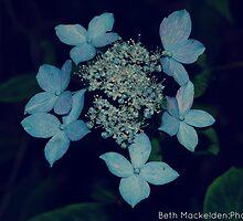 Blue Flowers by Beth Mackelden