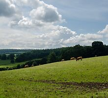 Rolling Hills & Grazing Cattle by oliverkealey