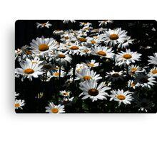 Daisy Days of Summer Canvas Print