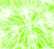 Dandelion clock - green by Ian Hosker
