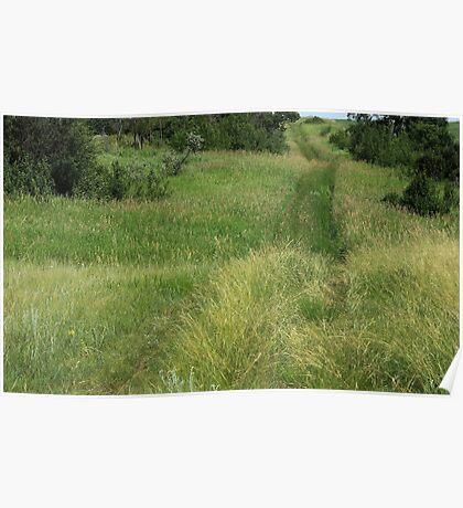 Farm trail through prairie grasses Poster