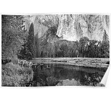 El Capitan Reflection in the Merced River, Yosemite, California Poster