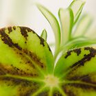 Plant Life 2 by david261272
