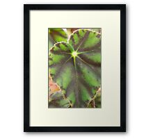 Plant Life 4 Framed Print