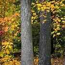 Tree Trunks in Autumn by andykazie
