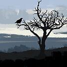 Raven iPhone Case by jvmedia