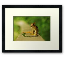 Trade Ya These Leaves for some Peanuts? Framed Print