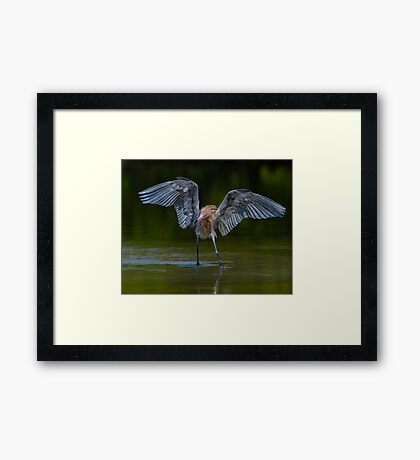 Chasing down a meal  Framed Print