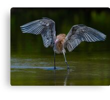 Chasing down a meal  Canvas Print