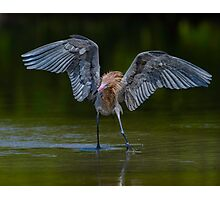 Chasing down a meal  Photographic Print