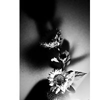 Sunflower Shadow Photographic Print