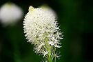 Bear Grass by Tori Snow