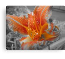 Orange Colored  Canvas Print
