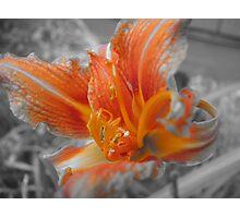 Orange Colored  Photographic Print