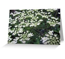 Flowers from the Wild Greeting Card