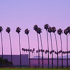 Palms in a straight line... by DonnaMoore