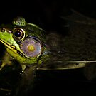Frog in shade! by vasu