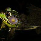 Frog in shade! by vasu