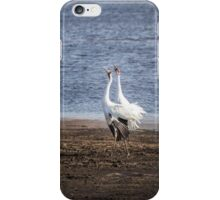 Territorial Call Of The Whooping Cranes 2015-2 iPhone Case/Skin