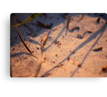 The Ants Go Marching One by One... Canvas Print