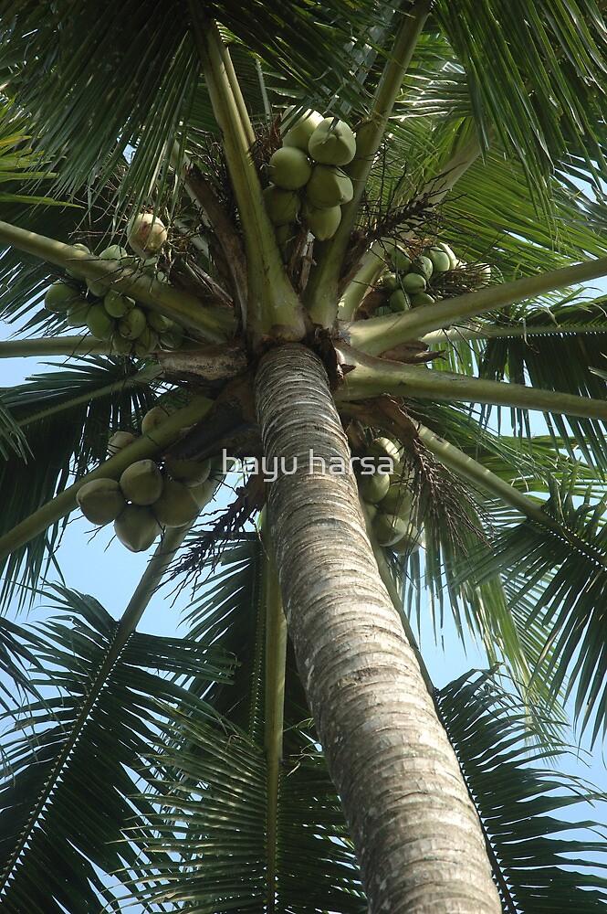 coconut tree by bayu harsa